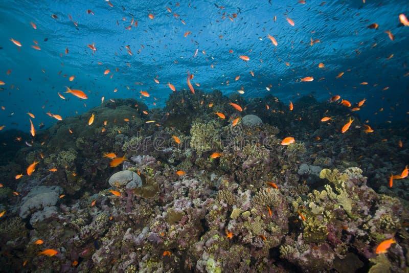 kolorowa rafa ryb zdjęcia stock