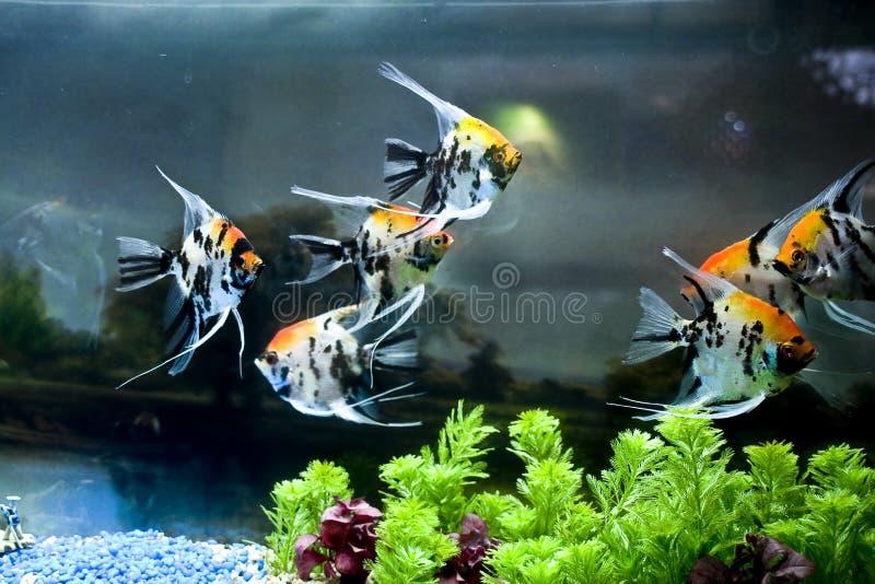 kolorowa ryba fotografia royalty free