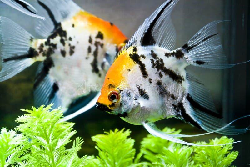 kolorowa ryba zdjęcia stock