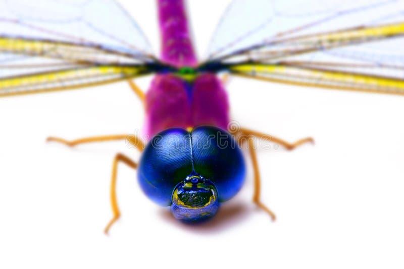 Kolorowa smok komarnica obraz stock
