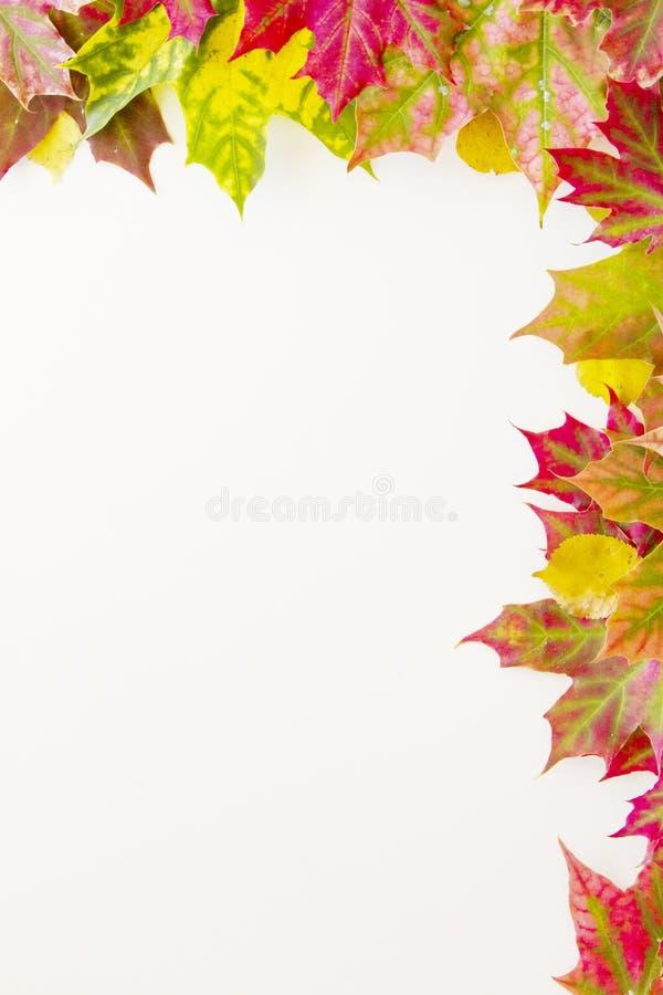Kolorowa spadków liści granica na białym tle zdjęcia royalty free