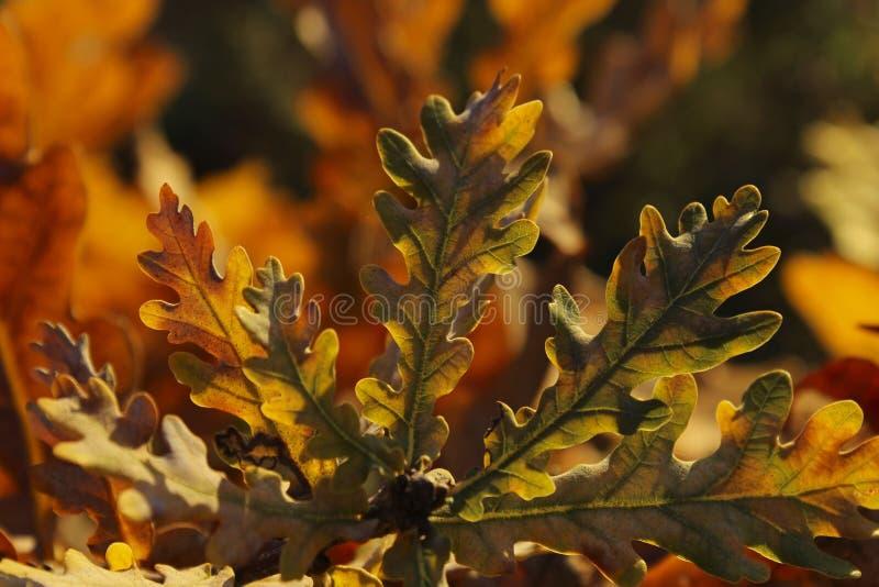 kolorowa tło natura jesienią kolorowe tło obrazy stock