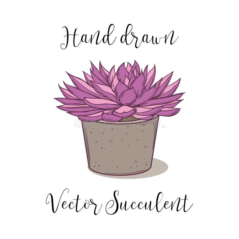 Kolorowa tłustoszowata roślina w betonowym kwiatu garnku Ręka rysująca wektorowa ilustracja ilustracji