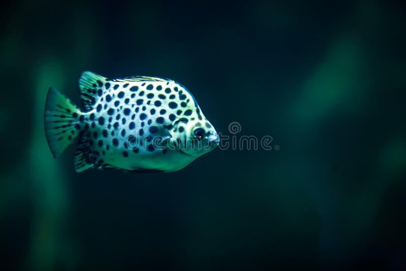 Kolorowa tropikalna ryba tropikalne ryby obraz stock