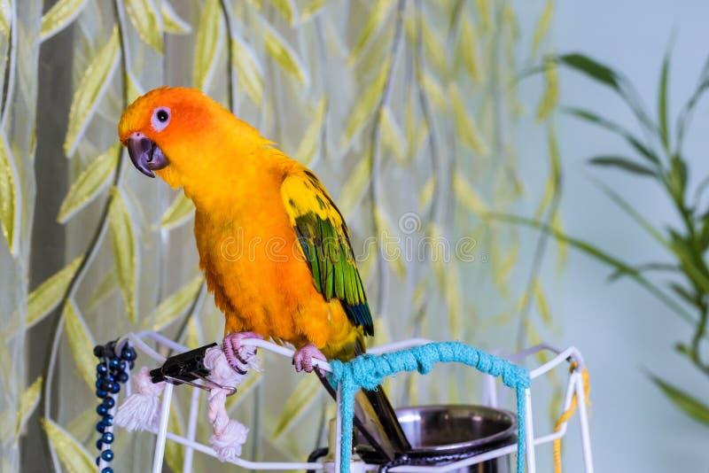 Kolorowa turkusowa papuga zamknięta w górę siedzi zdjęcia royalty free