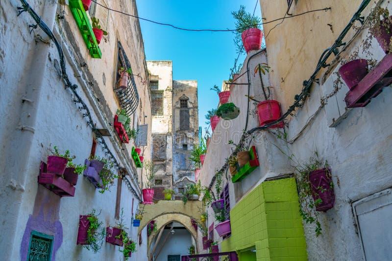 Kolorowa ulica z Doniczkowymi roślinami w El Jdid Medina w fezie Maroko fotografia stock