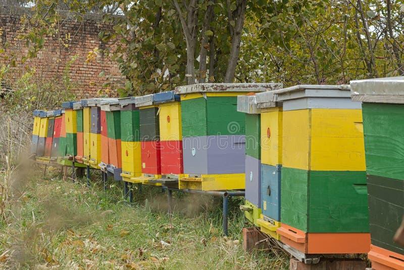 Kolorowa ulowa kolonia zdjęcia stock