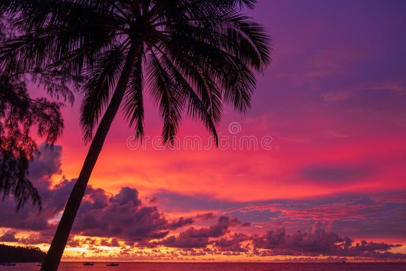 Kolorowa zmierzch czerwień, pomarańcze, błękitni kolory niebo z drzewkiem palmowym na tle zdjęcie royalty free