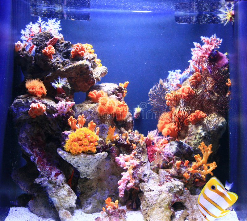 kolorowe akwarium pod wodą obrazy stock