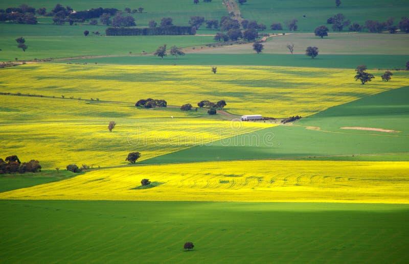 kolorowe australijskie łąki obrazy stock