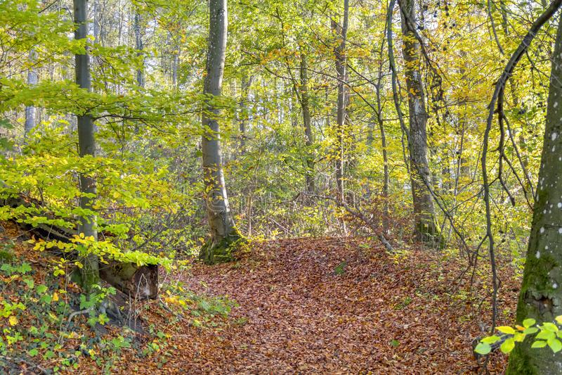 kolorowe jesieni las zdjęcia royalty free