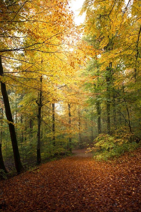 kolorowe jesieni las zdjęcie royalty free