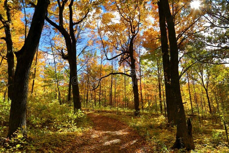 kolorowe jesieni zostaw widokiem las zdjęcie royalty free