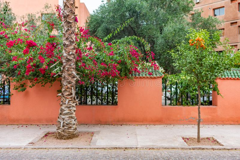 Kolorowe Kwiatonośne rośliny i drzewa z ogrodzeniem wzdłuż chodniczka w Marrakesh Maroko fotografia royalty free