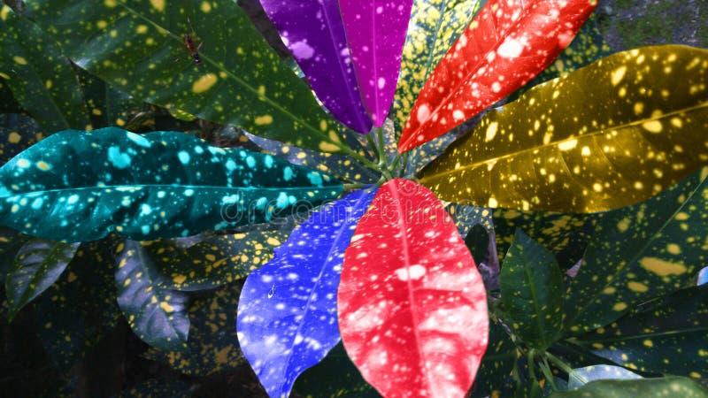 kolorowe liści, zdjęcie royalty free