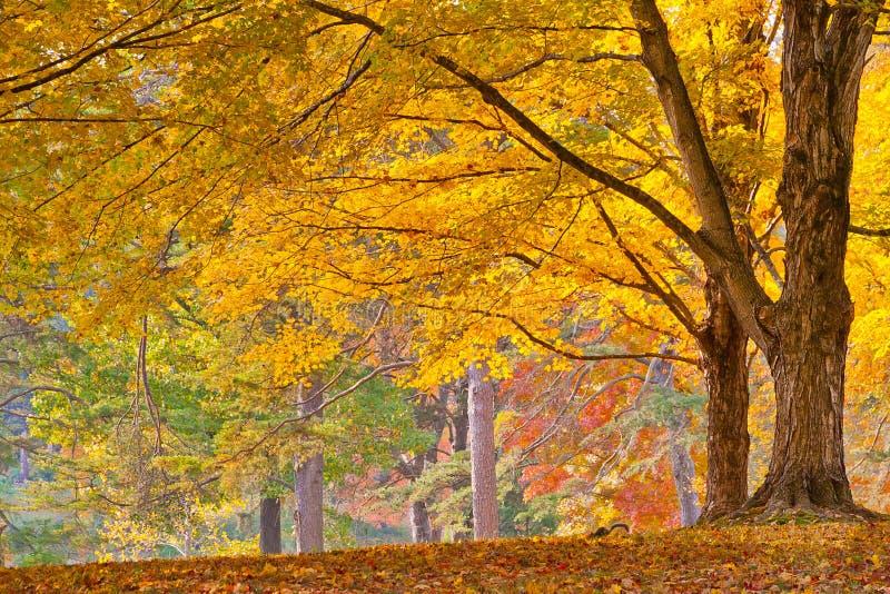 kolorowe liści jesienią zdjęcie stock