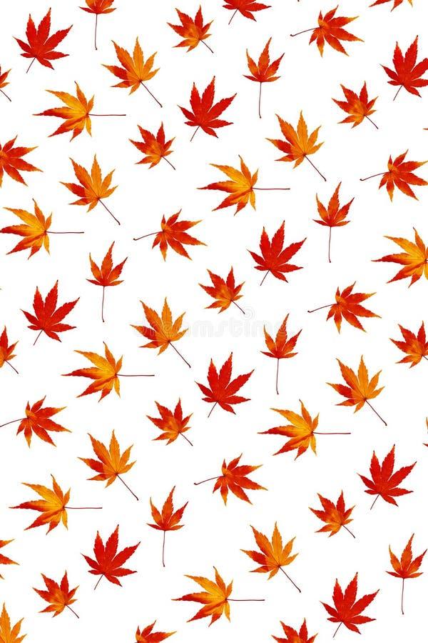 kolorowe liści klon abstrakcyjne obraz stock