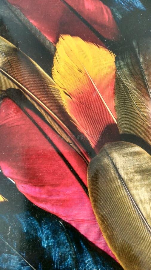 kolorowe liście obraz stock