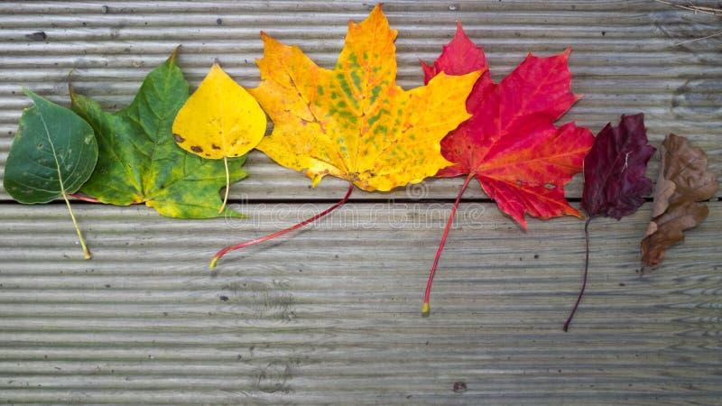 kolorowe liście zdjęcie stock