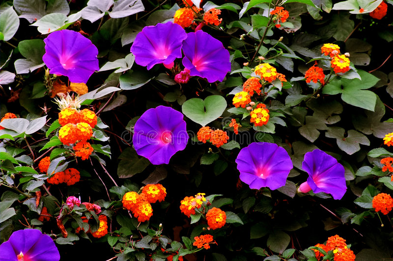 kolorowe ogród obrazy stock