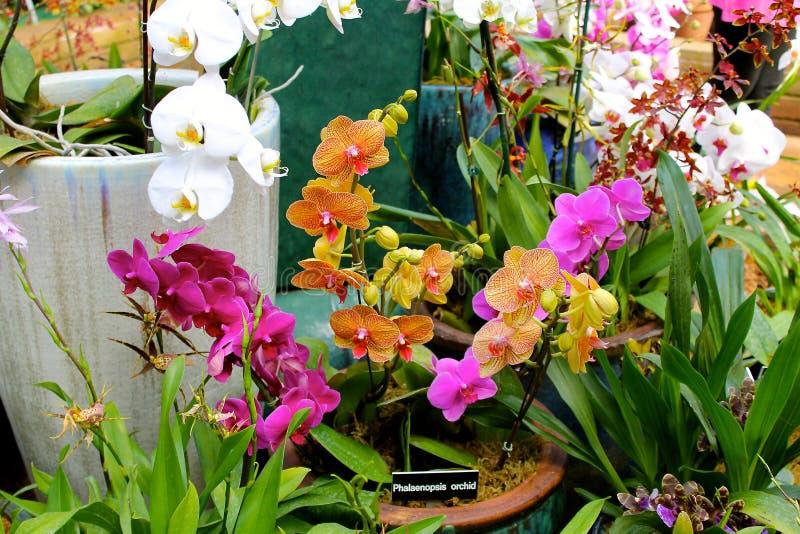 kolorowe orchidee obraz royalty free