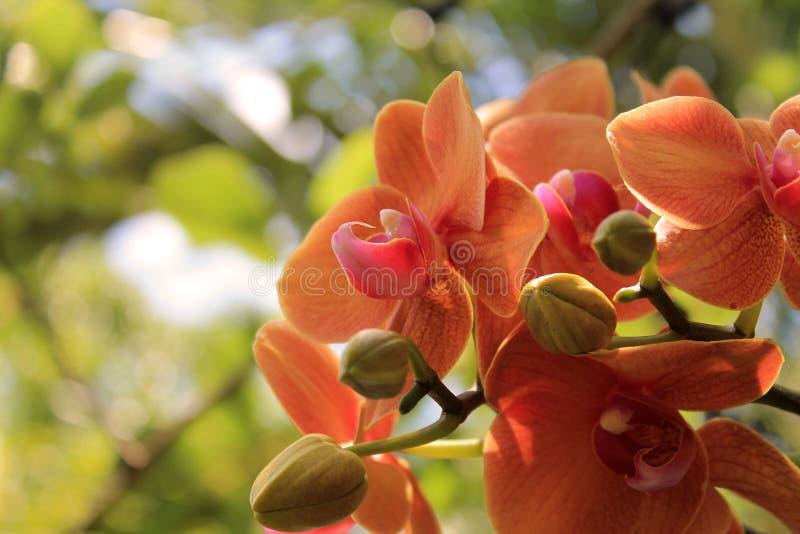 Kolorowe orchidee wiesza od drzewa fotografia royalty free
