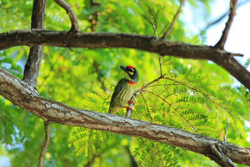 kolorowe ptaka zdjęcie stock