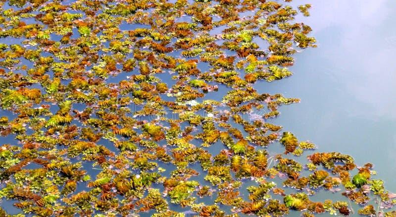 kolorowe roślin fotografia royalty free