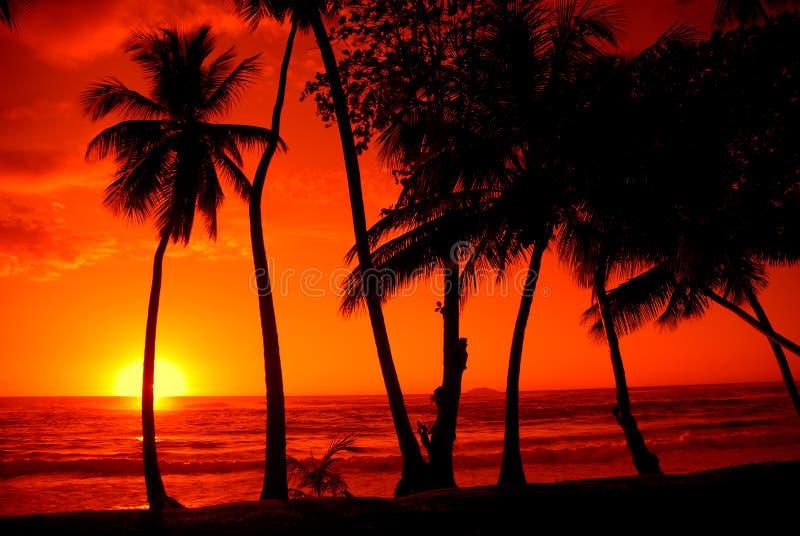 kolorowe słońca zdjęcia royalty free
