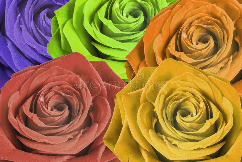 kolorowe tło róże fotografia royalty free
