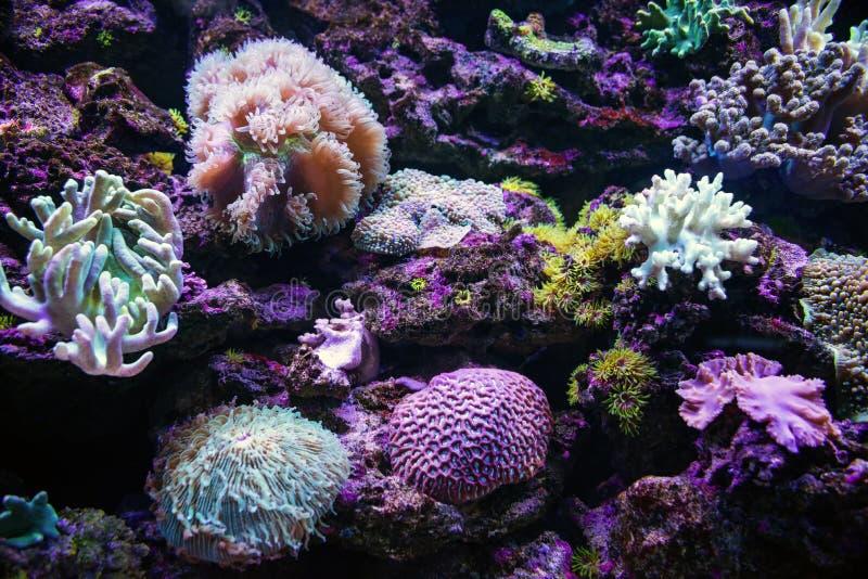 Kolorowe tropikalne rafy koralowa podwodny zdjęcie stock
