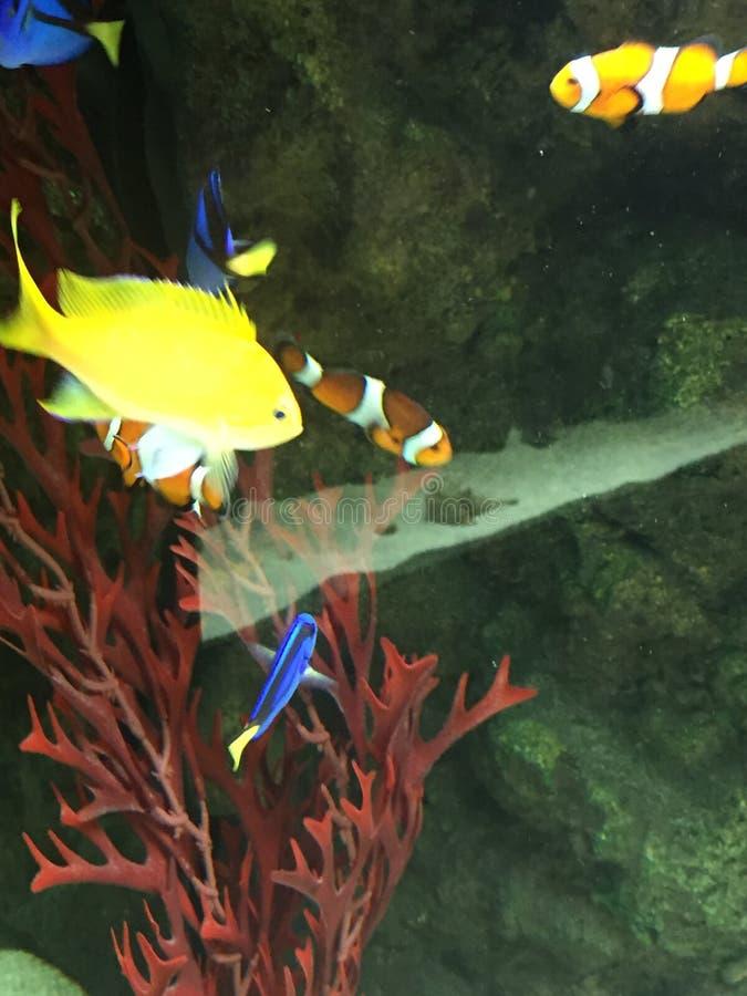 kolorowe tropikalne ryby zdjęcia stock