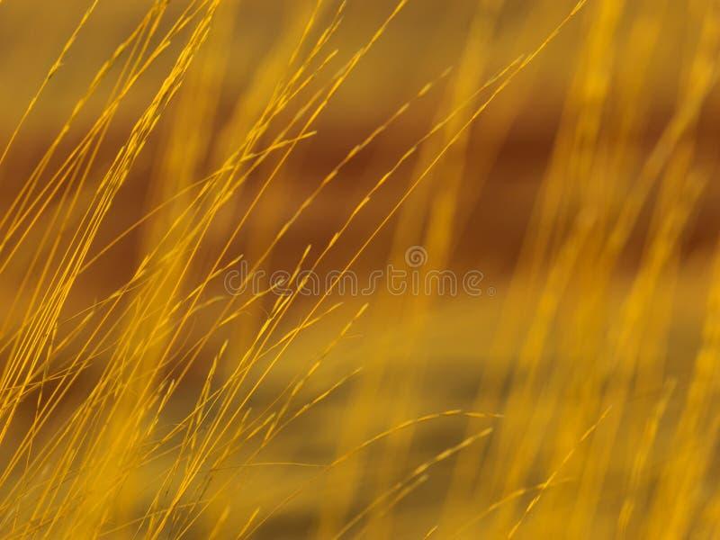 Kolorowe warstwy malująca jesieni trawa i wzgórza obraz stock