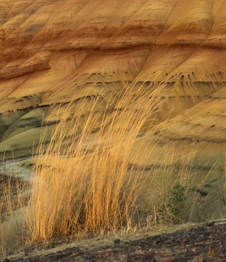 Kolorowe warstwy malująca jesieni trawa i wzgórza zdjęcia royalty free