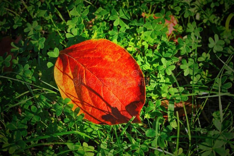 Kolorowego spadku czerwony urlop na tle zielona koniczyna obraz royalty free
