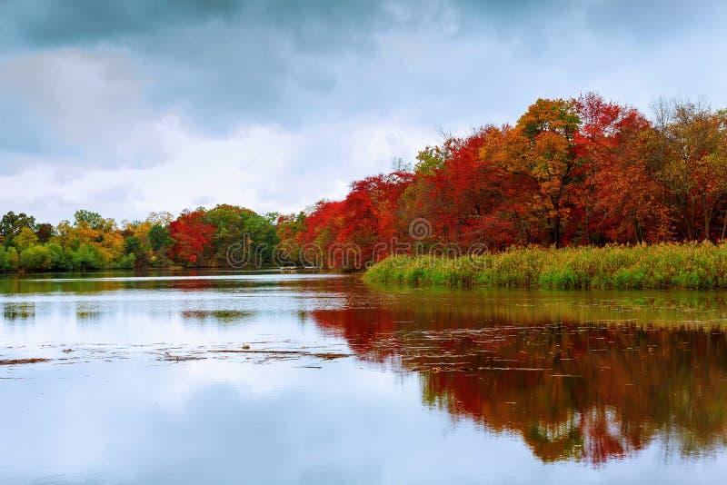 Kolorowej jesieni lasowy jeziorny rzeczny niebo chmurnieje chmurę pierzastą zdjęcia royalty free