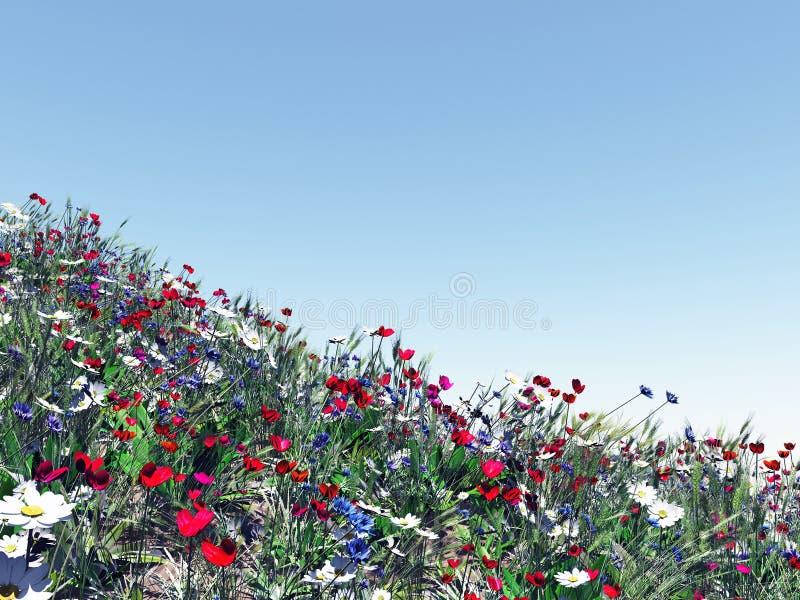 kolorowi śródpolni kwiaty fotografia royalty free