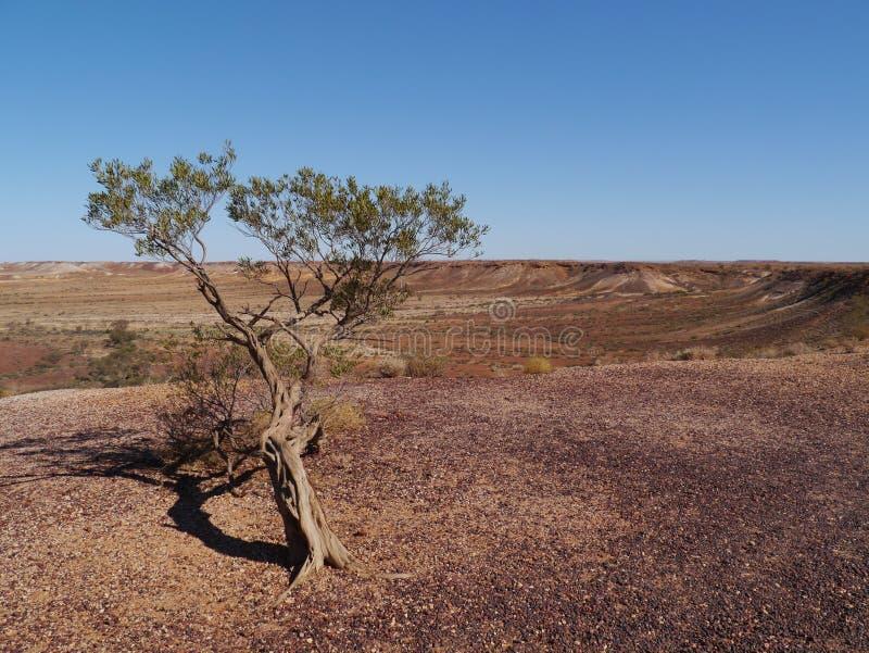 Kolorowi Breakaways w Australia zdjęcie stock