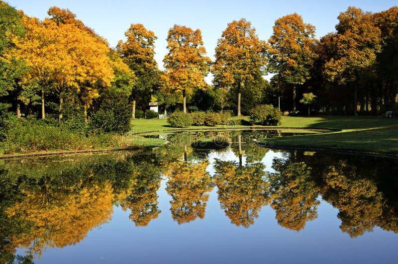 Kolorowi deciduous drzewa w jesieni obraz stock