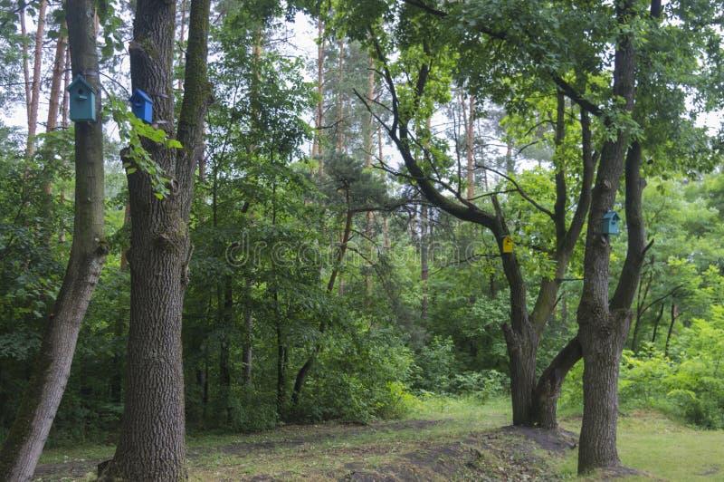 Kolorowi domy dla ptaków na drzewach obraz stock