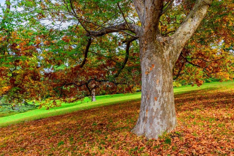 Kolorowi drzewa i jesień liście zdjęcie stock