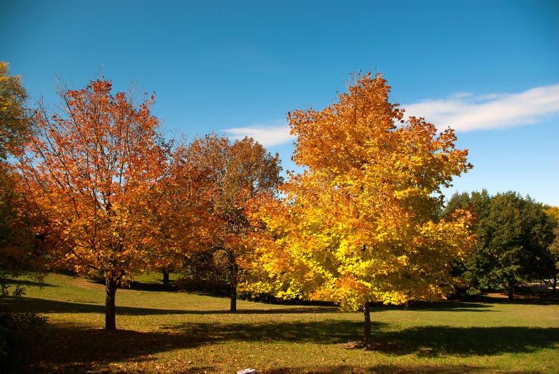 Kolorowi drzewa podczas wczesnego jesień ranku obrazy royalty free