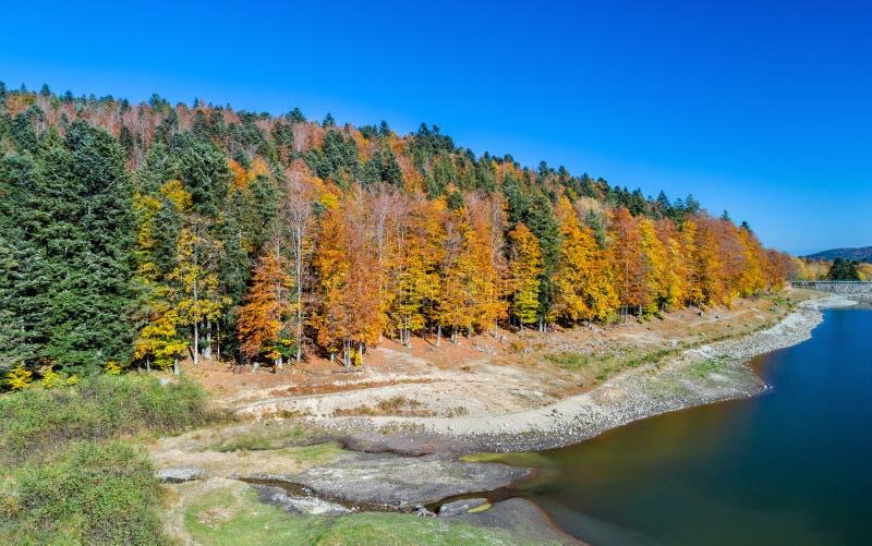 Kolorowi drzewa przy brzeg jeziora Lac De Los angeles Lauch w Vosges górach - Haut-Rhin, Francja zdjęcia royalty free