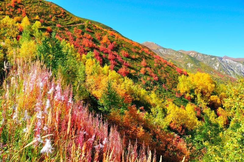 Kolorowi drzewa, Svaneti Gruzja obrazy stock
