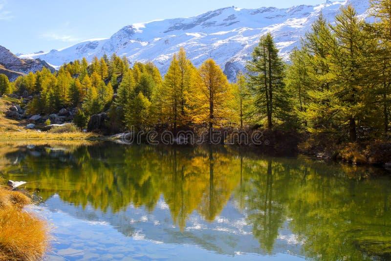 Kolorowi drzewa w jesieni przy Grindjisee jeziorem, Zermatt, Szwajcaria obrazy stock
