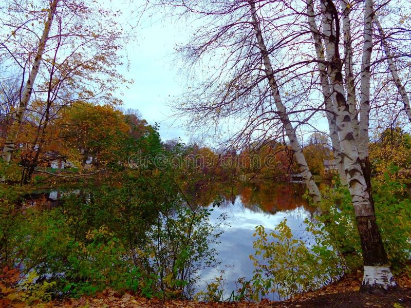 Kolorowi drzewa wokoło stawu zdjęcia royalty free
