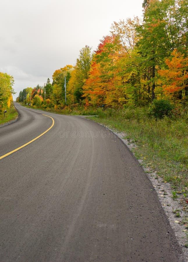Kolorowi drzewa wzdłuż drogi w spadku obrazy stock