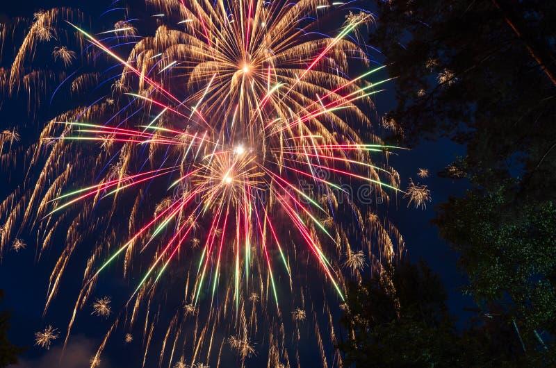 Kolorowi fajerwerki na tło zmroku - niebieskie niebo i drzewa fotografia royalty free