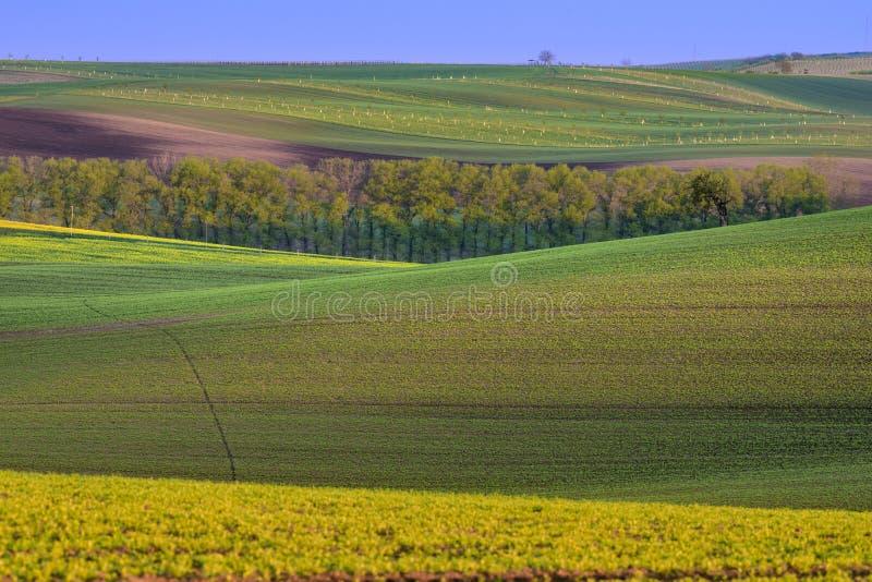 Kolorowi faliści wzgórza na Moravia zdjęcie royalty free
