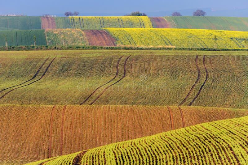 Kolorowi faliści wzgórza w Południowym Moravia zdjęcie stock